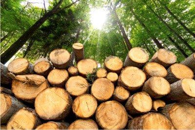 Mit gut aufbereitetem naturbelassenem Holz aus Ihrer Region und einem modernen NMT-Heizkessel heizen Sie umweltbewusst.